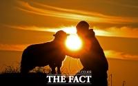 [TF다이어리] 어둠을 뚫고 '의기羊羊'한 2015년 새해가 밝았다