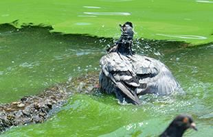 [TF탐사선] 한강 녹조 확산, '정부•지자체 근본적 대책은?'