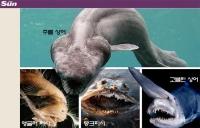 [TF월드뉴스] 물고기야 괴물이야! '바다 몬스터' 시선 집중