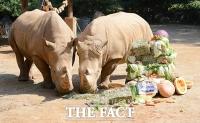 [TF사진관] '생일 맞은 코뿔소', 케이크도 남다른 크기