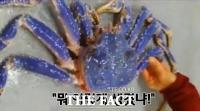 [TF영상] '희귀한' 블루 킹크랩, 노량진수산시장에 떴다!