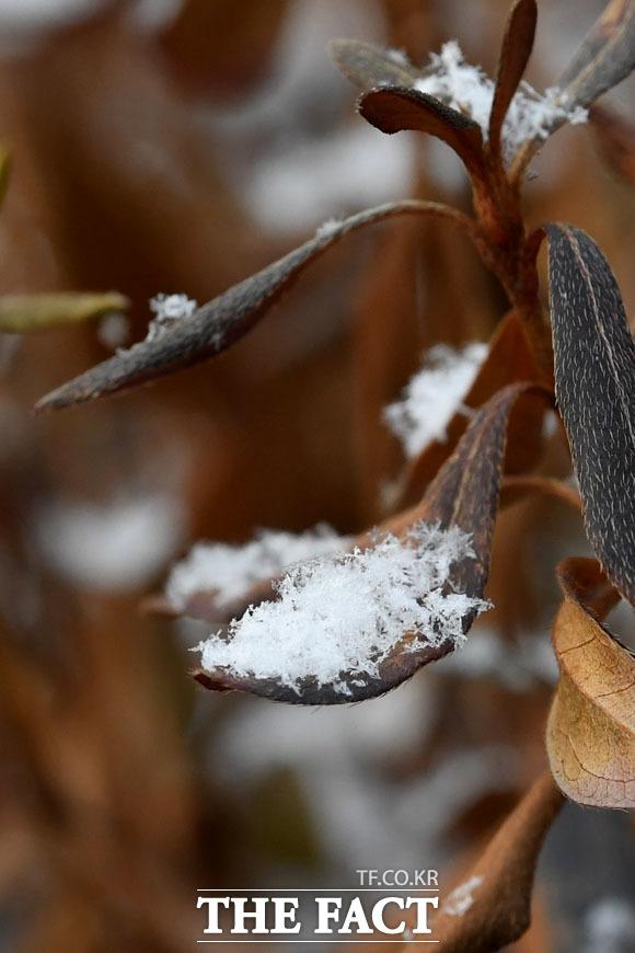 아침 기온 6.5도로 북극발 한파의 기세가 누그러진 13일 오전 서울 마포구 일대에 눈꽃송이가 쌓여 있다./남윤호 기자
