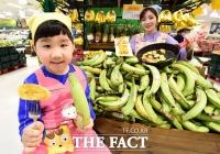 [TF포토] 이마트, 요리용 플랜틴 바나나 출시 '구워 드세요~'