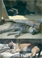 [TF사진관] '더워서 다 귀찮아~'…폭염에 지친 동물들