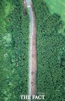 [TF사진관] 제주 비자림로 공사 중단했지만...'이미 잘려나간 삼나무'