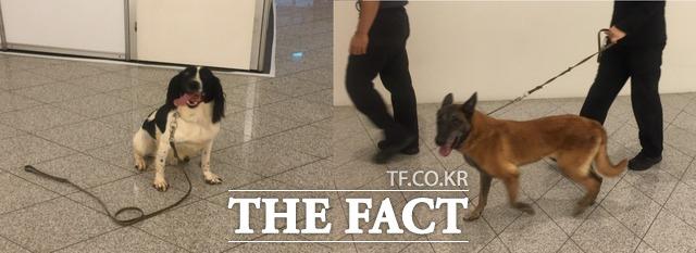 귀여운 강아지들은 사실 폭발물을 탐지하는 막중한 임무를 수행하고 있었다. 사진은 폭발물탐지견들이 문 대통령의 방문에 앞서 서울 프레스센터를 탐색하는 모습. /임현경 인턴기자