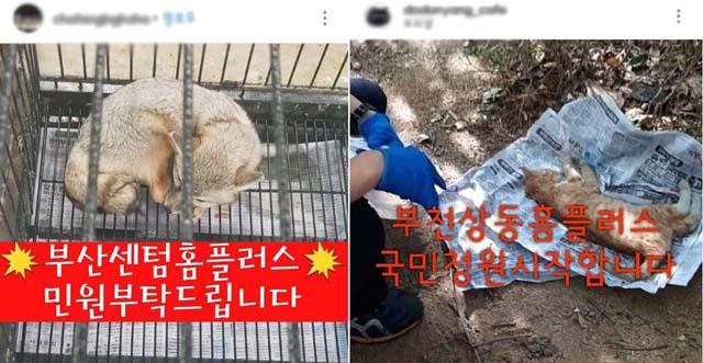 최근 경기도 부천의 한 홈플러스 매장에서 길고양이 포획틀을 설치했다는 사실이 알려져 홈플러스가 동물학대 논란의 중심에 섰다. /온라인 커뮤니티 갈무리