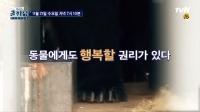 '곽승준의 쿨까당' 동물권 실태 집중 조명…'동물의 행복은 어디에'