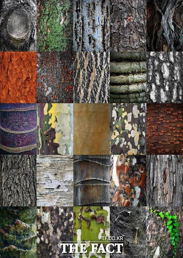 25개 개성파 나무들이 그린 추상화 한 폭 9월 16일부터 21일까지 6일간 서울 시내 곳곳의 나무를 A4용지 크기로 카메라에 담았다. 25개 개성파 나무들의 모습은 마치 추상화 한 폭을 연상케 한다. /이덕인 기자