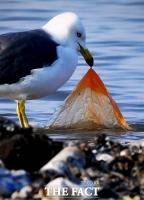 [TF포토기획] '쓰레기 치우는 갈매기'…환경 오염의 부끄러운 '민낯'