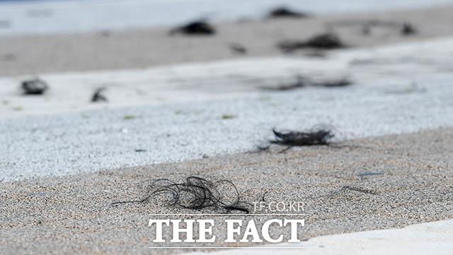 가발 아닙니다 황 대표에게 끊임없이 제기됐던 가발설. 그러나 삭발식 전체를 지켜본 후 떨어진 머리카락까지 직접 만져봤지만 가발이 아닌 것으로 보였다.