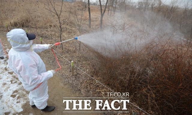 농림축산식품부는 지난 15일 충남 아산에서 채취한 야생조류 분변에 대한 국립환경과학원의 중간검사 결과 H5형 조류인플루엔자(AI) 항원이 검출됐다고 20일 밝혔다. /더팩트DB