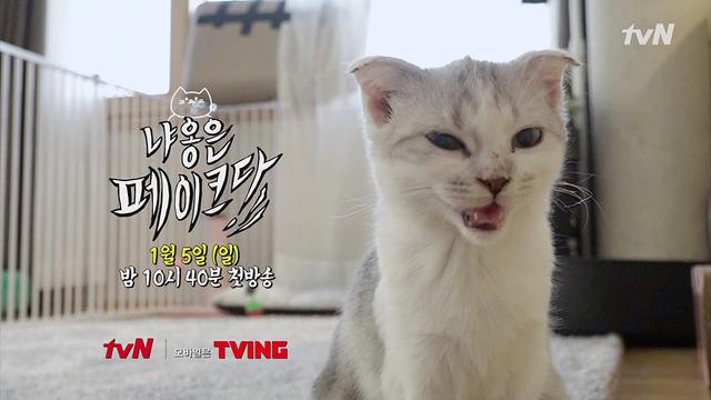 tvN 예능 냐옹은 페이크다가 유기묘 입양 절차와 관련해 첫 방송부터 논란에 휩싸였다. /tvN 제공