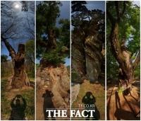 '천년 나무'의 묵직한 메시지···'조승래 사진전'