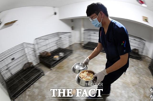 김태훈 재활치료사가 지난달 6일 오후 서울 관악구 서울시야생동물센터에서 너구리에게 줄 먹이를 준비하고 있다.