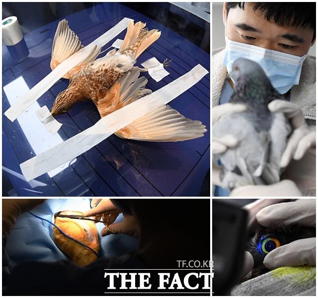 서울시야생동물센터는 구조부터 재활 방생까지 야생동물들의 삶의 최전선에서 이들을 보호하고 있다.