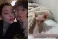 김선아, 故 설리 반려묘 '블린이' 입양…