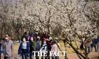 [TF포토에세이] 봄꽃에 묻힌 '사회적 거리두기'