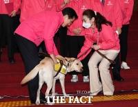 [TF포토] 시각장애인 안내견 쓰다듬는 황교안 대표