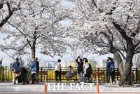 [TF사진관] 벚꽃 만개한 윤중로, 차량은 통제되고 '사람은 북적북적'