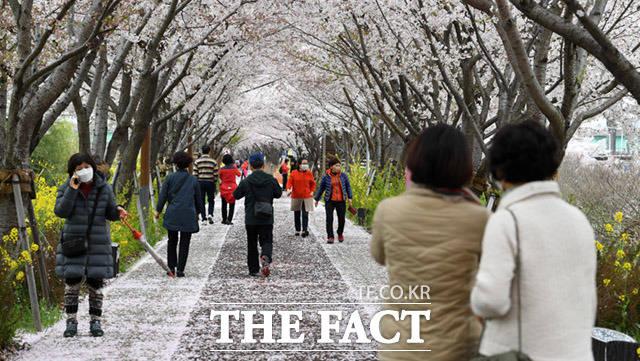 바로 옆 강둑길에 만개한 벚꽃 사이로 관광객들이 가득 모여있다.