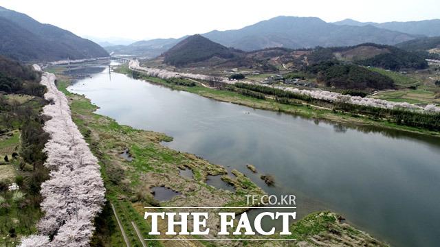한국에서 가장 아름다운길 100선에 포함되어 있는 전라남도 구례군 섬진강 벚꽃길에 벚꽃이 만개해 있다.