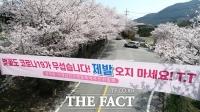 [TF포토기획] '올해는 오지 마세요!'…사회적 거리두기 필요한 봄꽃 명소들
