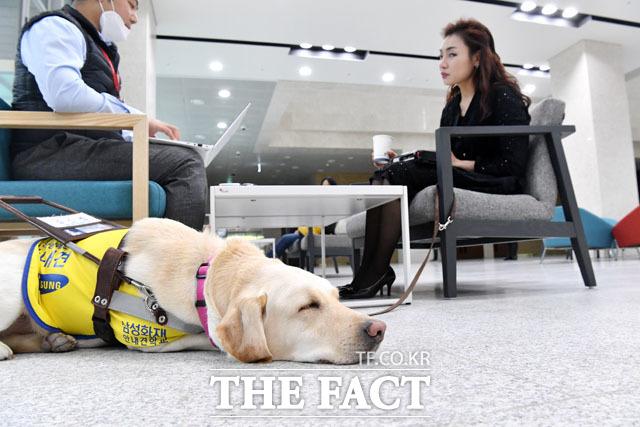 김예지 당선인이 지난 22일 오후 국회 소통관에서 <더팩트>와 인터뷰를 하고 있는 가운데 안내견 조이가 잠시 휴식을 취하고 있다. /남윤호 기자