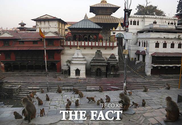 네팔 카트만두의 파슈파티나트 사원은 폐쇄 기간동안 원숭이들의 낙원이 되었다.