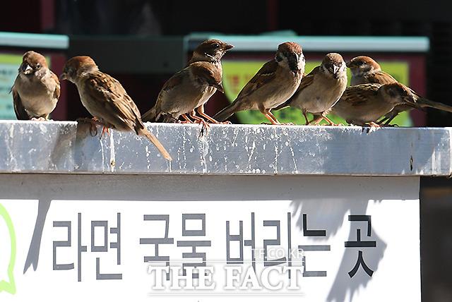 15일 서울 여의도 한강공원 내 편의점의 라면 국물 버리는 개수대에 참새들이 모여 자리를 잡고 있다. /이새롬 기자