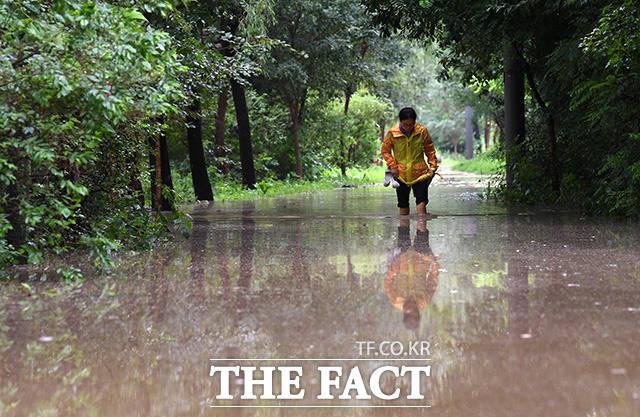 장마전선의 영향으로 중부지방에 연일 강한 비가 내리고 있는 3일 오전 서울 여의도 샛강생태공원일대의 산책로가 침수된 가운데 한 시민이 강물이 불어 무릎까지 오는 길을 빠져나오고 있다./임영무 기자