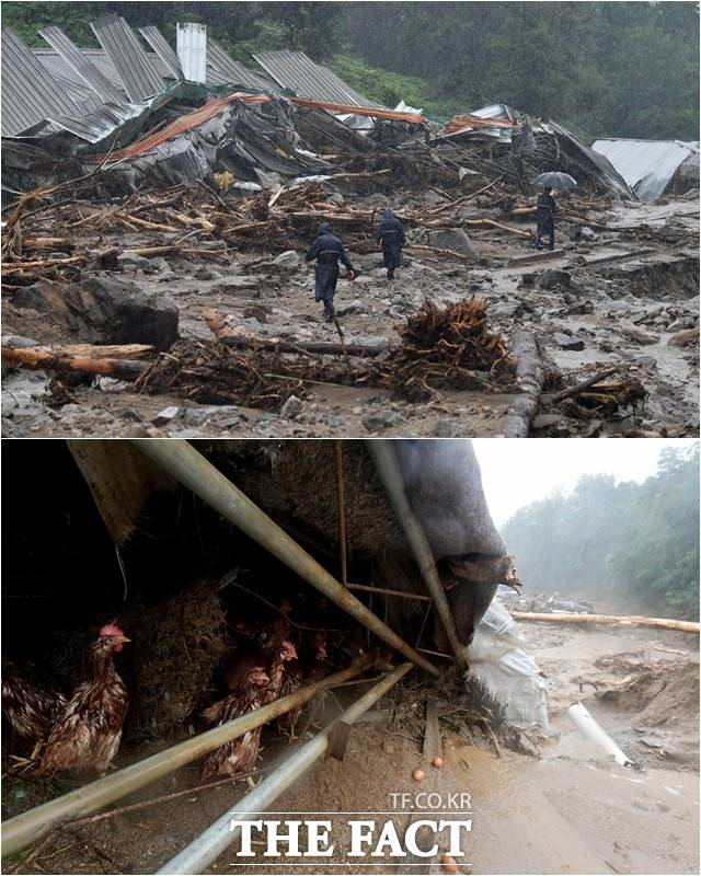 중부지방을 중심으로 많은 비가 쏟아진 3일 오후 경기 안성시 일죽면의 한 양계장이 산사태 피해로 처참한 모습을 보이고 있다. /안성=이덕인 기자