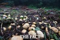 [TF사진관] '물폭탄에 산사태까지'…'피해입은 농작물'