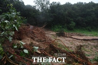 [TF포토] 폭우로 인해 뿌리 뽑힌 나무들