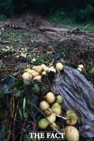 [TF포토] '폭우와 산사태 피해' 망가져버린 농작물