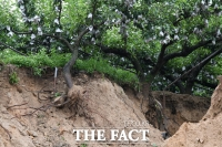 [TF포토] 나무 뿌리 파헤친 집중호우