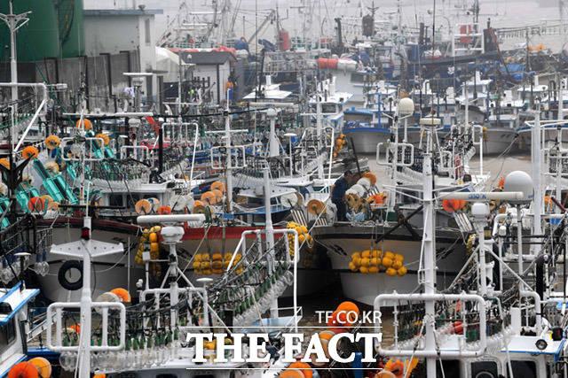 9월 7일 강원도 동해시 묵호항에 어선들이 태풍 하이선의 피해를 막기위해 결박되어 있다.