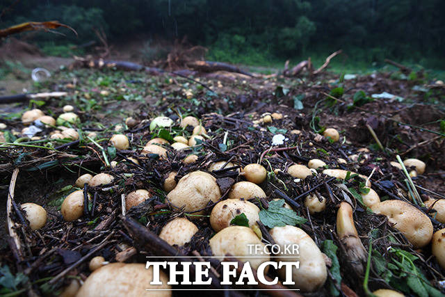 8월 3일 오후 충북 충주시 산척면 인근의 밭이 산사태로 인해 처참한 모습을 보이고 있다.