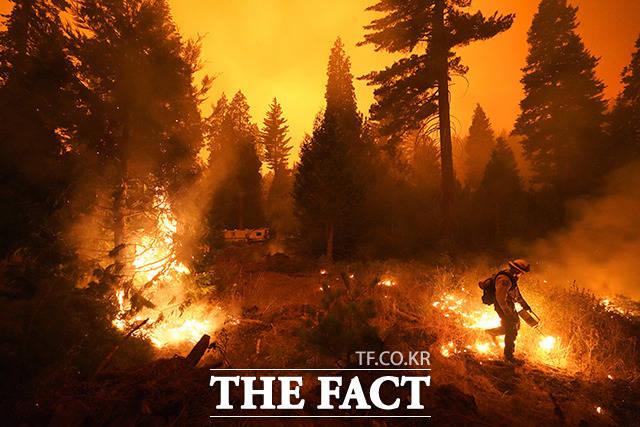 6일(현지시간) 미 캘리포니아주 센트럴밸리에 있는 시에라 국립산림에서 발생한 크리크 파이어 화재가 확산하는 가운데 셰이버레이크의 한 소방관이 산불 통제를 위해 맞불을 놓고 있다. / 셰이버레이크=AP.뉴시스