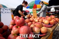 [TF포토] 추석 앞두고 탐스럽게 익은 사과