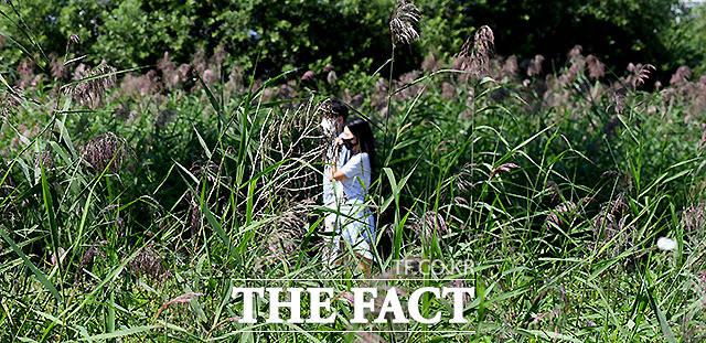 서울시가 여의도, 뚝섬, 반포 한강공원의 일부 밀집지역에 적용됐던 통제조치를 해제한다. 시민들이 서울 잠원 한강공원 억새길을 걷고 있다. /이새롬 기자