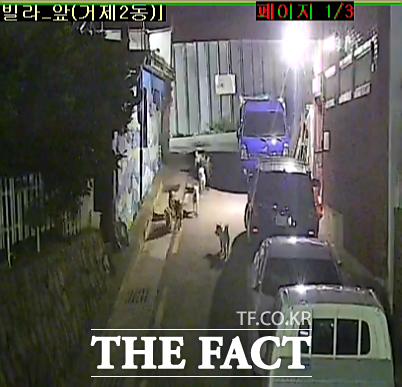 지난 7월 7일 밤 11시46분쯤 부산 연제구 거제2동 주택가에 들개 7마리가 무리지어 다니고 있는 모습이 방범용 CCTV에 포착됐다. /제보자 제공