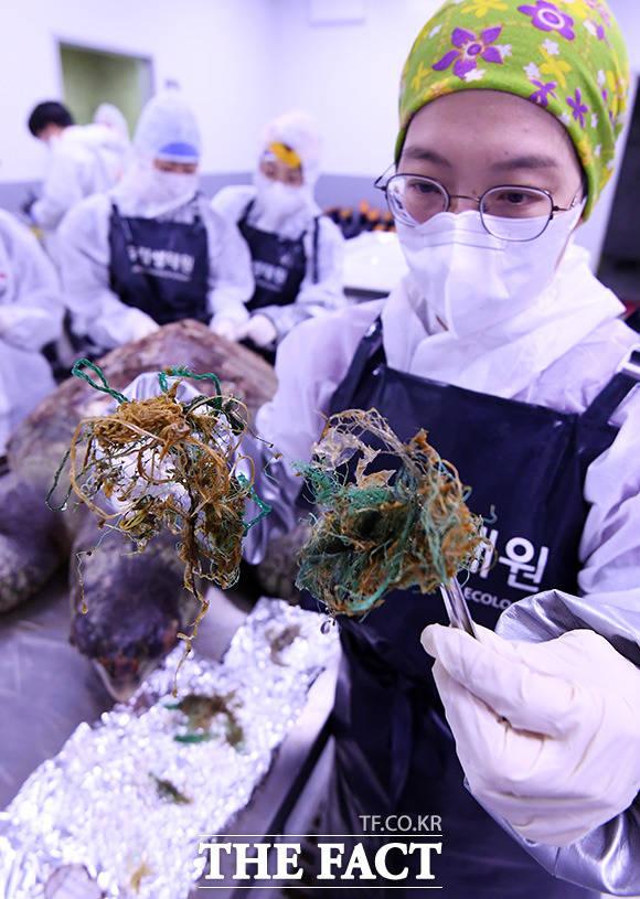 붉은바다거북 부검에서 발견된 폐그물.