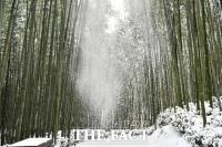 [TF사진관]담양 죽녹원·관방제림의 그림 같은 '설경'