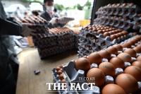 AI 확산·닭 1000만 마리 살처분에…달걀 산지 가격 48%↑