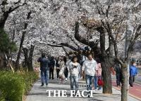올해도 여의도 벚꽃축제 못 본다…자치구 행사 2년째 파행