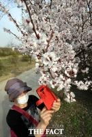 코로나19에도 어김없이 찾아온 벚꽃의 향연 [TF사진관]