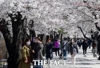 여의도 벚꽃길 통제 하루 앞두고 '북적' [TF사진관]