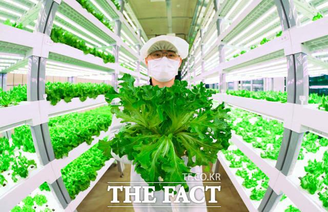 파릇파릇한 채소들 최근 정보통신기술을 농업에 접목한 지능화된 농장을 의미하는 스마트팜이 늘어가는 가운데 13일 지하철 7호선 상도역 내 위치한 메트로팜의 한 직원이 직접 재배한 채소를 들어보이고 있다. /임세준 기자