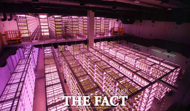 팜에이트 내부 전경 모습. 이처럼 내부에는 거대한 식물공장이 자리잡고 있다.